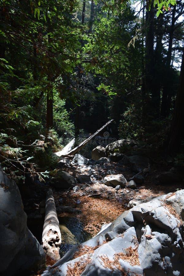 Bosque Big Sur Califórnia da sequoia vermelha da floresta nacional dos capelães do Los - a árvore caída faz a ponte através da an foto de stock royalty free