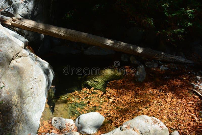 Bosque Big Sur Califórnia da sequoia vermelha da floresta nacional dos capelães do Los - a árvore caída faz a ponte através da an imagem de stock