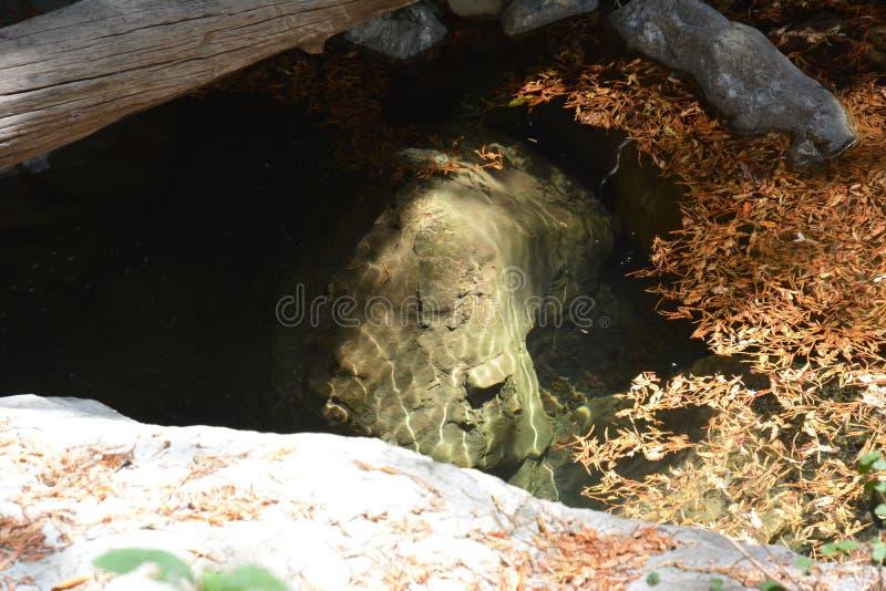 Bosque Big Sur Califórnia da sequoia vermelha da floresta nacional dos capelães do Los - a árvore caída faz a ponte através da an fotos de stock