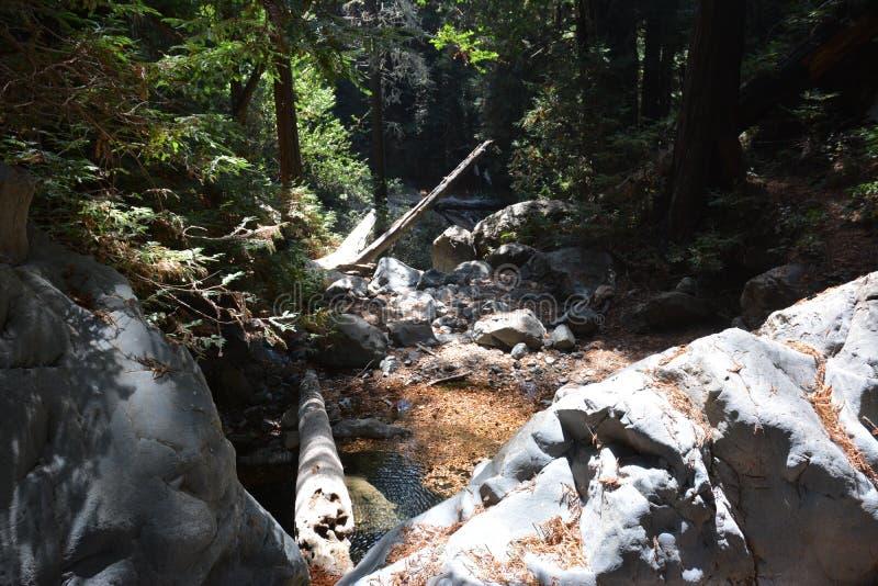 Bosque Big Sur Califórnia da sequoia vermelha da floresta nacional dos capelães do Los - a árvore caída faz a ponte através da an fotos de stock royalty free