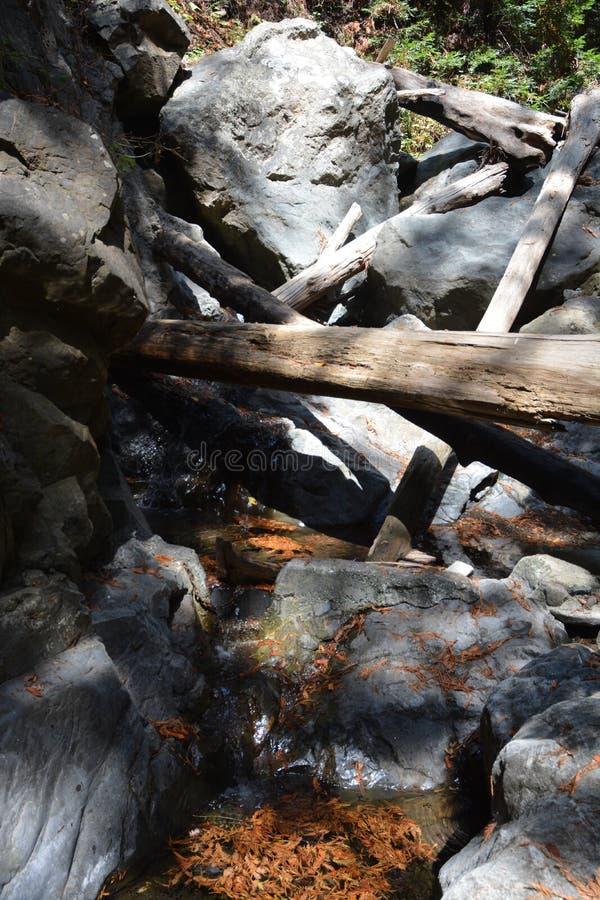Bosque Big Sur Califórnia da sequoia vermelha da floresta nacional dos capelães do Los - a árvore caída faz a ponte através da an imagens de stock
