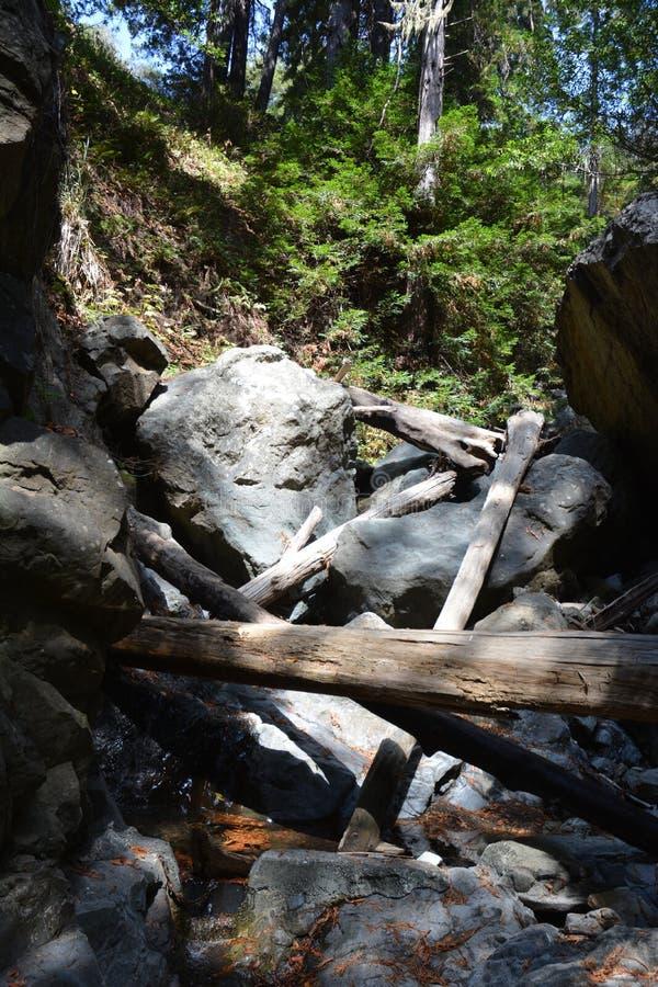 Bosque Big Sur Califórnia da sequoia vermelha da floresta nacional dos capelães do Los - a árvore caída faz a ponte através da an imagens de stock royalty free
