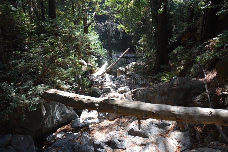 Bosque Big Sur Califórnia da sequoia vermelha da floresta nacional dos capelães do Los - a árvore caída faz a ponte através da ga fotos de stock royalty free