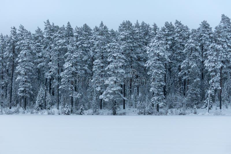 Bosque blanco brillante cubierto con helada y nieve imagen de archivo