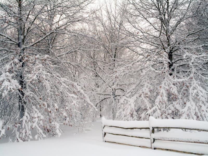 Bosque blanco como la nieve fotos de archivo