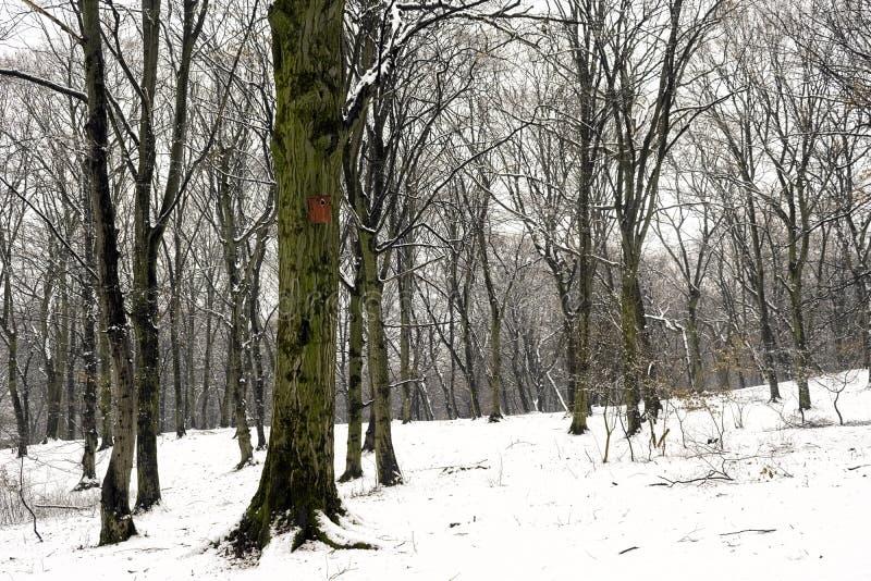 Bosque blanco del invierno después de nevadas imagen de archivo