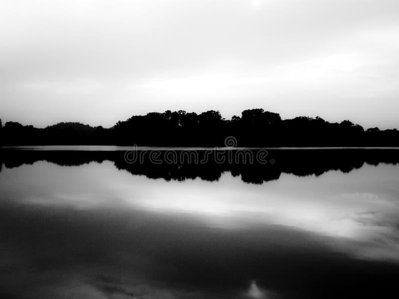 Bosque blanco negro imagen de archivo libre de regalías