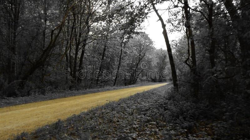 Bosque blanco y negro a lo largo del rastro imagenes de archivo