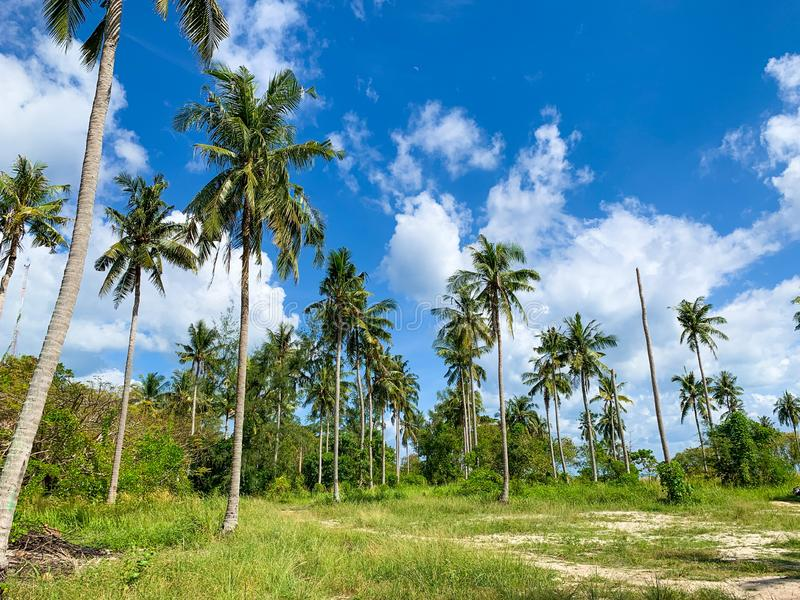 Bosque bonito da palma da ilha tropical de Paradise fotos de stock royalty free