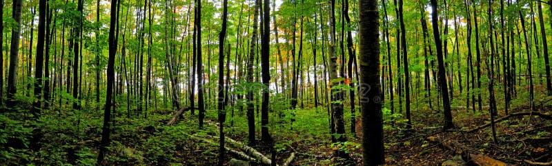 Bosque boreal septentrional foto de archivo libre de regalías