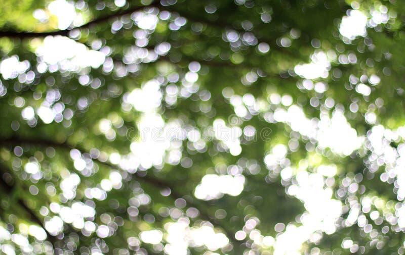 Bosque borroso del árbol de la naturaleza bajo fondo brillante de la luz del sol, planta verde suave del fondo del bokeh abstract fotos de archivo