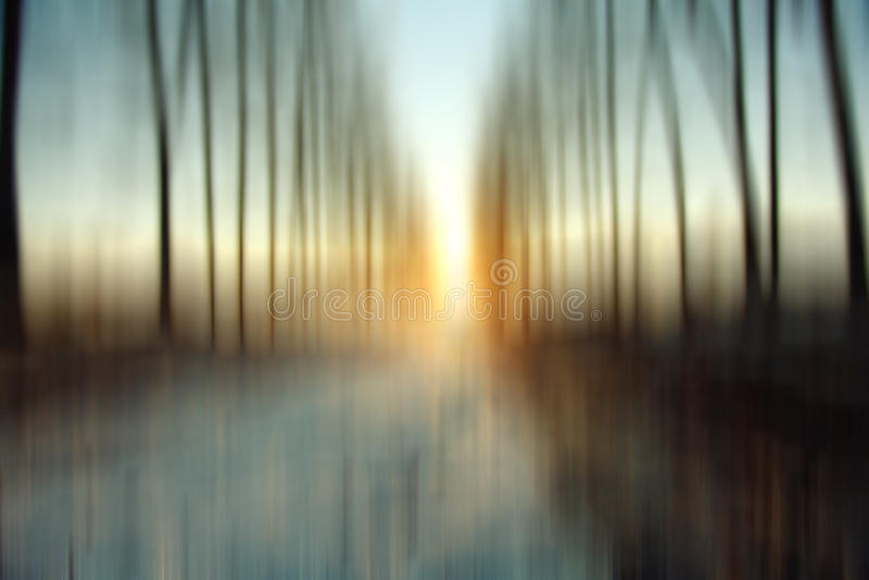 Bosque borroso del invierno del fondo foto de archivo