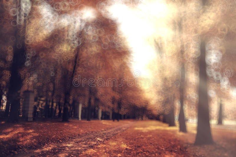Bosque borroso del otoño del fondo imagenes de archivo