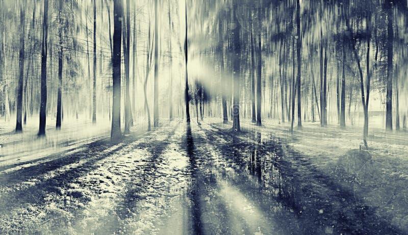 Bosque borroso paisaje del otoño fotos de archivo