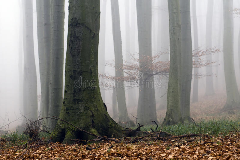Bosque brumoso imagenes de archivo