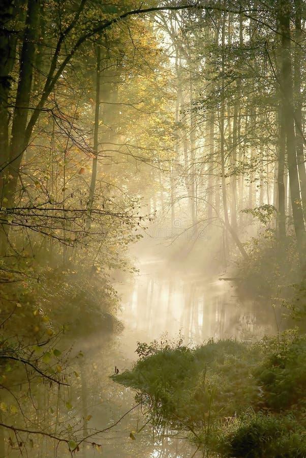Bosque brumoso con los rayos del sol de la madrugada fotos de archivo libres de regalías