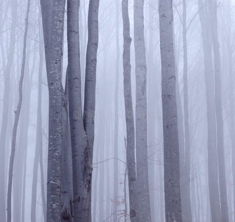Bosque brumoso de la haya imagen de archivo