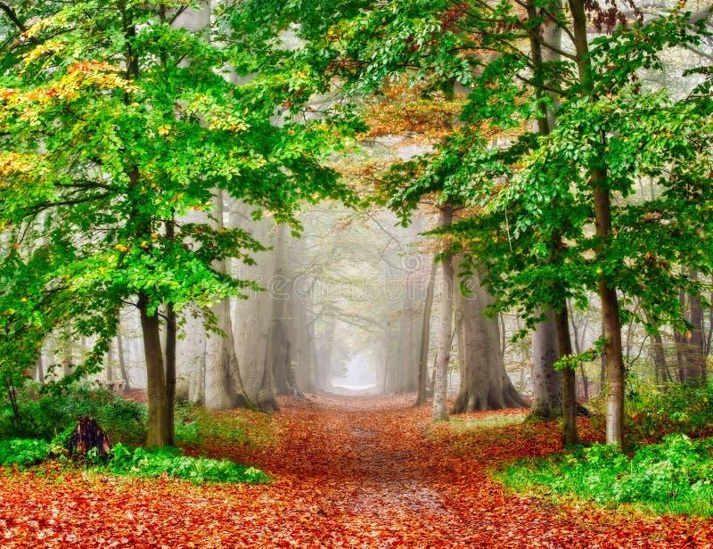 Bosque brumoso del otoño imagenes de archivo