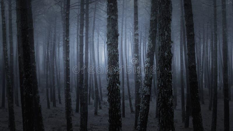 Bosque brumoso oscuro imágenes de archivo libres de regalías