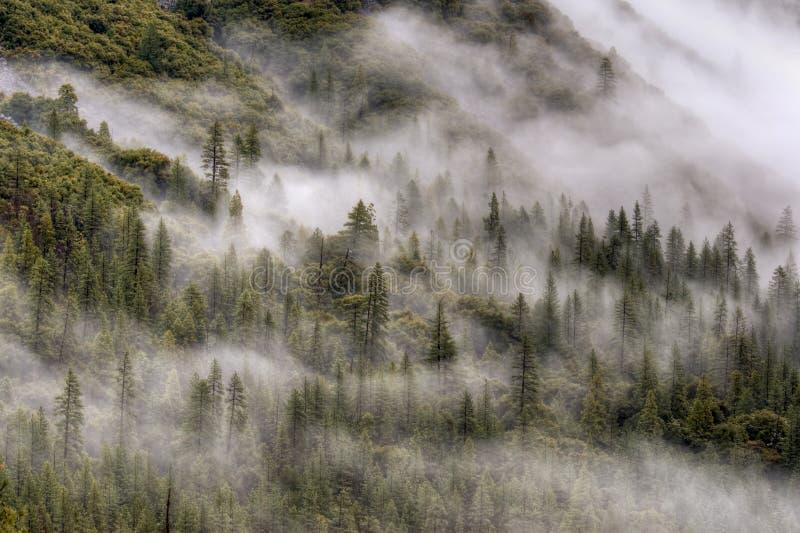Bosque brumoso, Yosemite fotografía de archivo libre de regalías