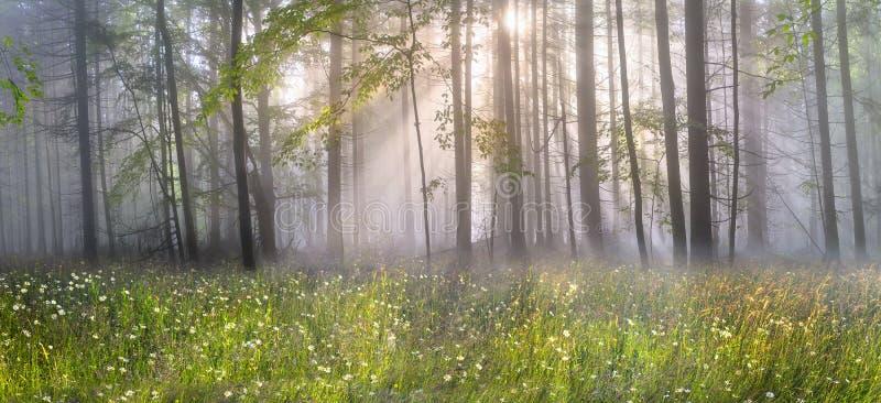 Bosque cárpato mágico en el amanecer fotos de archivo