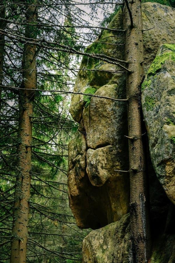 Bosque cárpato misterioso con la cara del león dentro imagen de archivo