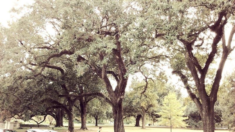 Bosque calmo das árvores imagem de stock