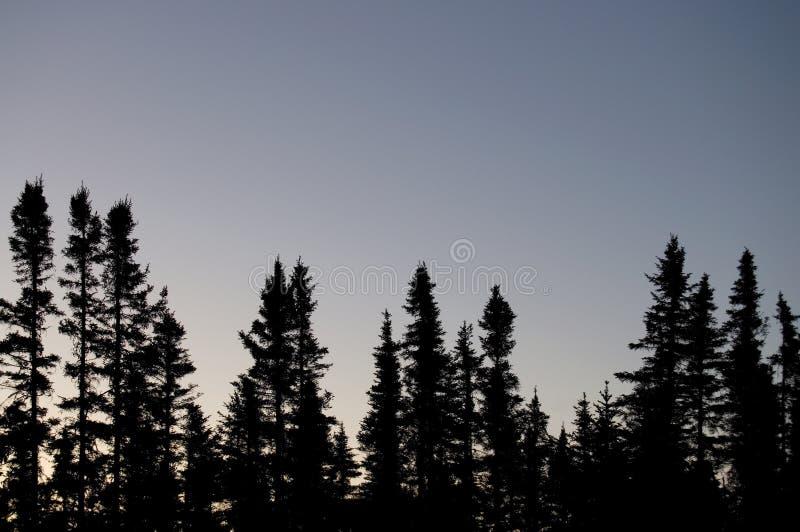 Bosque canadiense septentrional en la oscuridad fotos de archivo libres de regalías