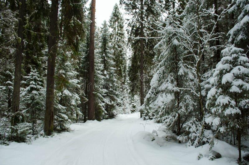 Bosque carelio del invierno imagenes de archivo