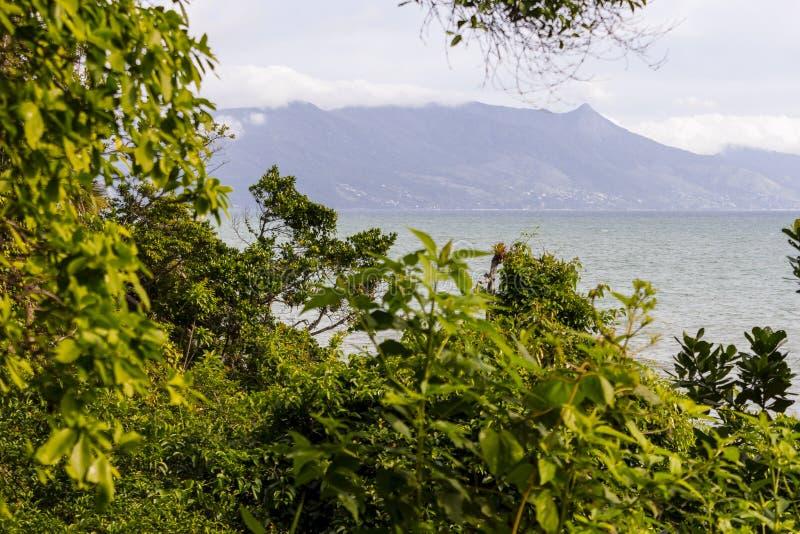 Bosque cerca del mar imagenes de archivo