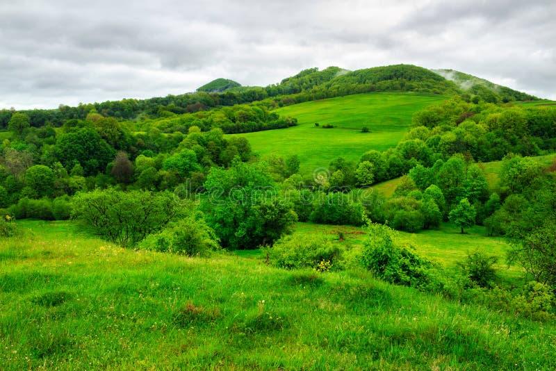 Download Bosque Cerca Del Prado En Montañas Foto de archivo - Imagen de travieso, fondo: 41910638