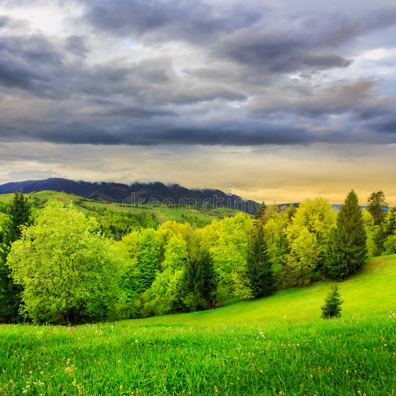 Download Bosque Cerca Del Prado En Montañas Imagen de archivo - Imagen de fondo, bosque: 41910667
