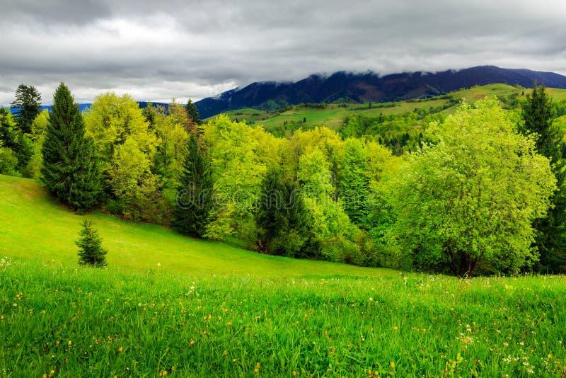 Download Bosque Cerca Del Prado En Montañas Imagen de archivo - Imagen de paisaje, valle: 41910695