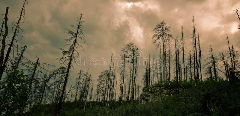 Bosque chamuscado foto de archivo