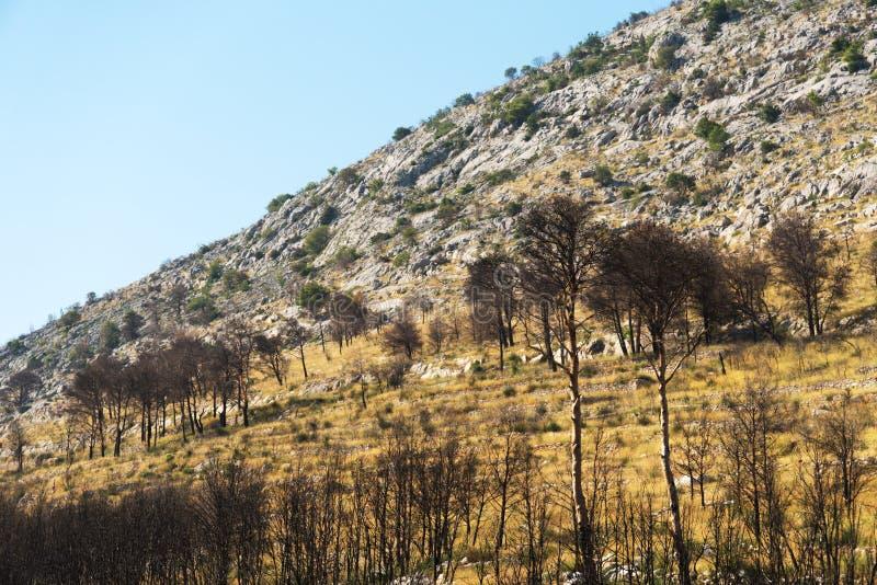 Bosque chamuscado fotografía de archivo