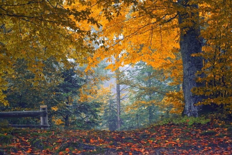 Bosque colorido del otoño imagen de archivo