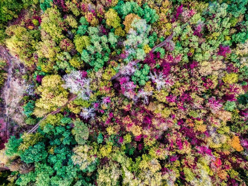 Bosque colorido del otoño fotos de archivo