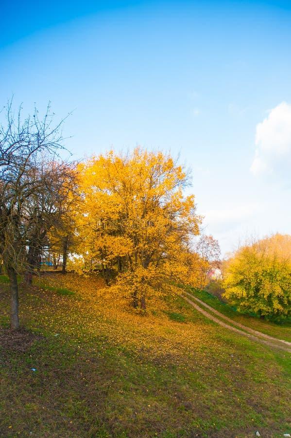 Bosque colorido del otoño en caída del desierto de Ozark Mountain de Arkansas Los árboles vienen vivo con color como las estacion foto de archivo