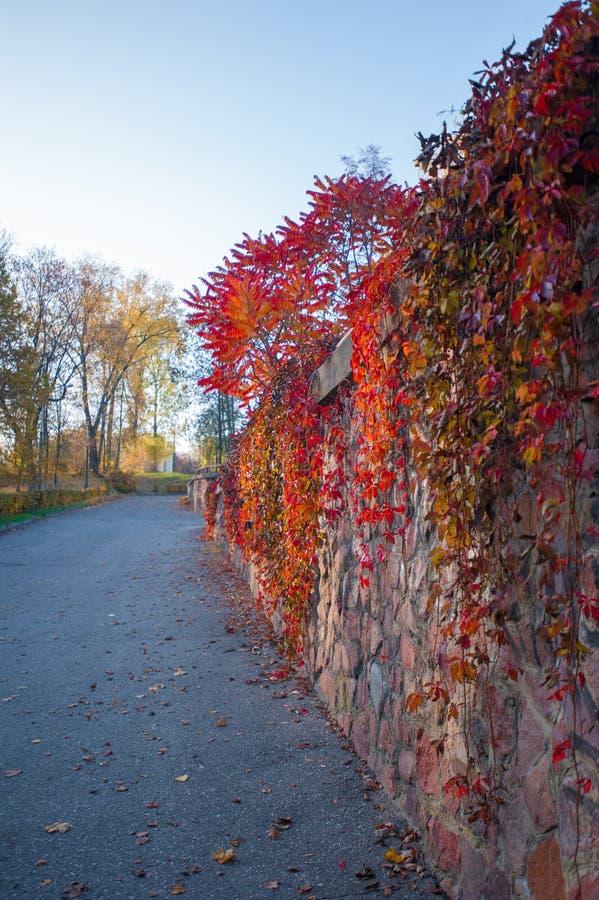 Bosque colorido del otoño en caída del desierto de Ozark Mountain de Arkansas Los árboles vienen vivo con color como las estacion fotos de archivo