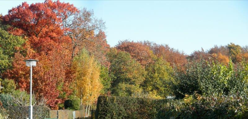 Bosque colorido del otoño del panorama foto de archivo