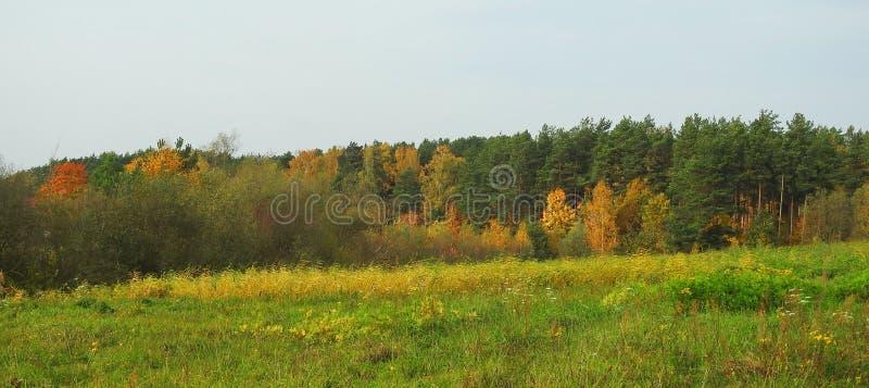 Bosque colorido en otoño, Lituania imágenes de archivo libres de regalías