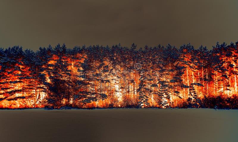 bosque conífero del invierno, tratamiento por ordenador, inversión Efecto de fuego Rusia fotos de archivo