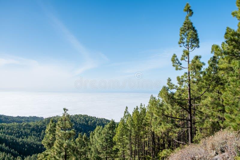 Bosque conífero en paisaje de la montaña sobre las nubes foto de archivo