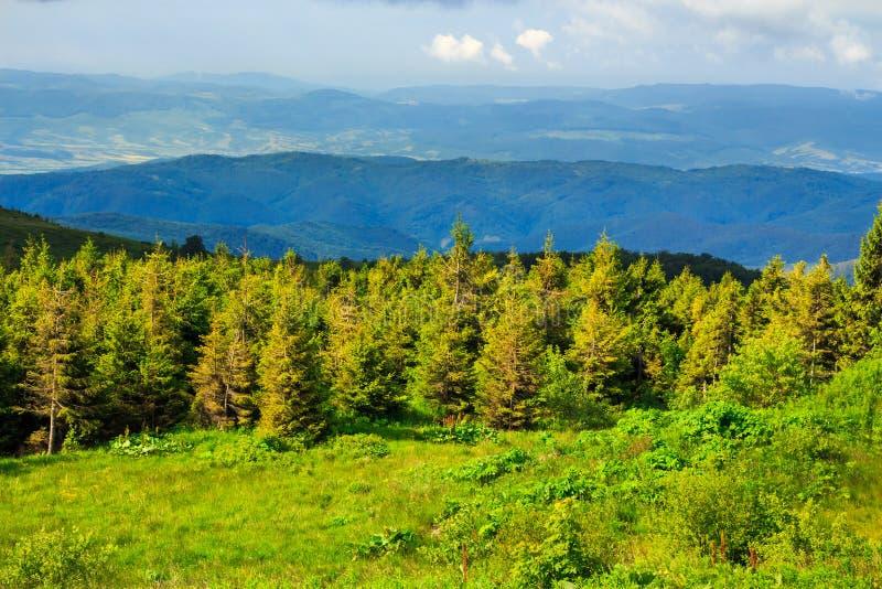 Download Bosque Conífero En Una Cuesta De Montaña Imagen de archivo - Imagen de outdoor, turismo: 41910719