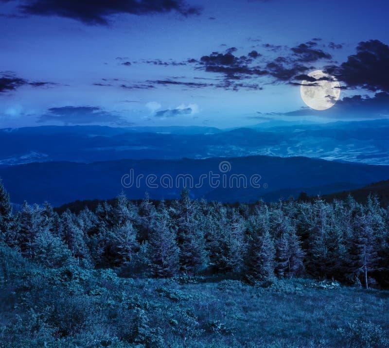 Download Bosque Conífero En Una Cuesta De Montaña En La Noche Imagen de archivo - Imagen de hiking, full: 41910713