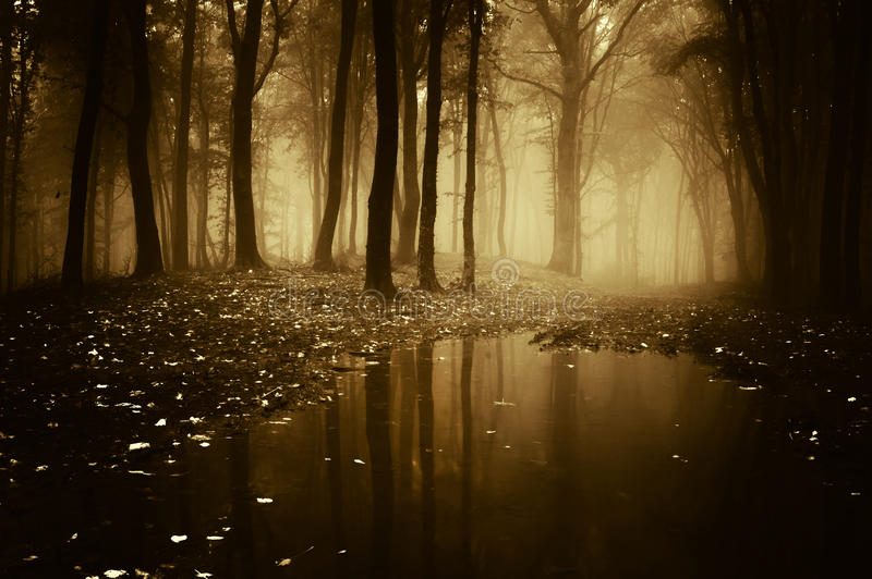 Bosque con la charca en otoño foto de archivo
