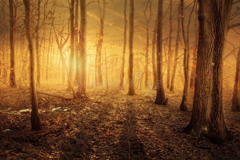 Bosque con la luz mágica imagenes de archivo