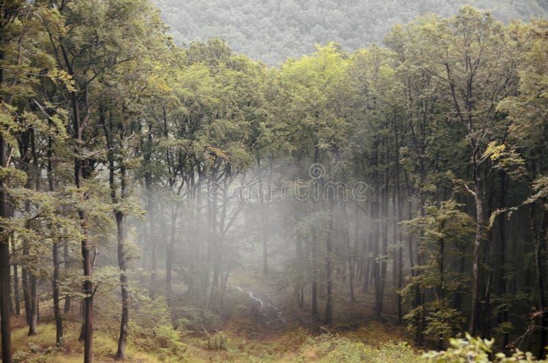 Bosque con la niebla de la ejecución imagenes de archivo