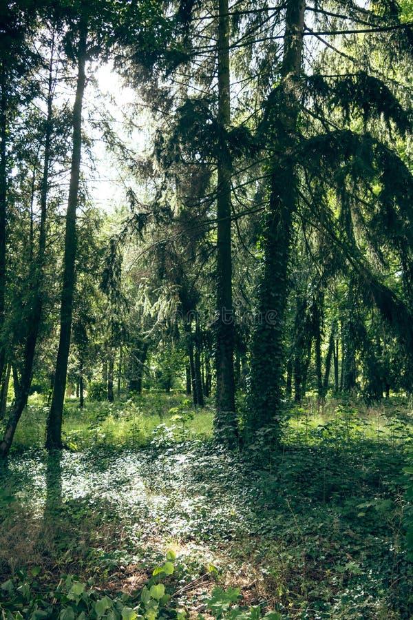 Bosque con luz del sol fotografía de archivo