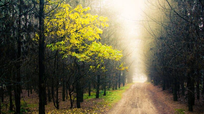 Bosque con niebla imagen de archivo libre de regalías